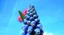 blå blomma mot blå himmel